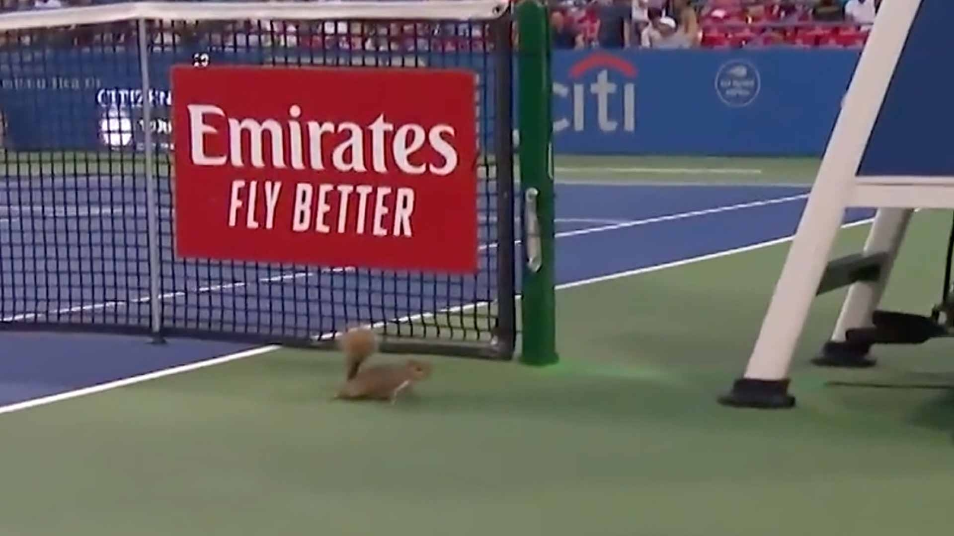 Катеричка изкара акъла на руския тенисист Карен Хачанов. Това се