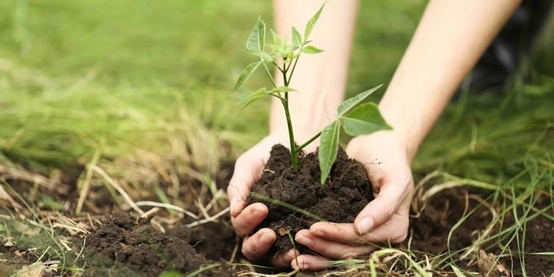 Европейската футболна асоциация (УЕФА) ще засади 600 хиляди дръвчета в