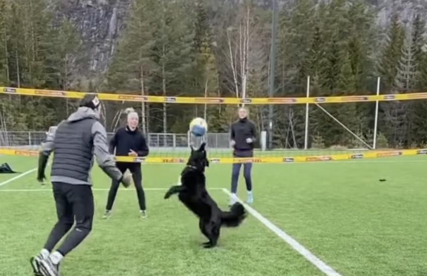 Виждали ли сте куче да играе волейбол на високо, или
