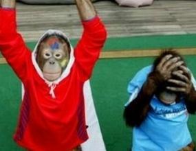 Република Корея изпрати националите си с маймунски поздрави