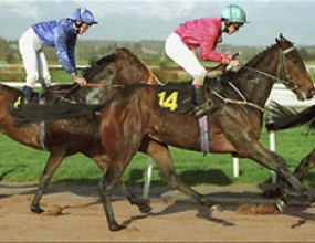 На 15 юли ще се проведат конните надбягвания от състезателен сезон 2007