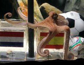 Октоподът Паул се произнесе: Испания ще е новият световен шампион! (видео)