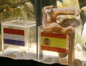 Испански бизнесмен предложи 30 000 евро за октопода Паул