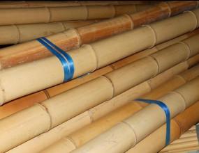 Японските националки по джудо са бити с бамбукови пръти