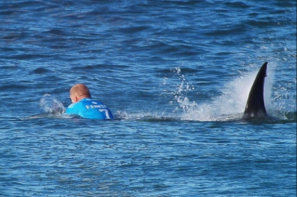 Шокиращо - акула атакува трикратен световен шампион (ВИДЕО + СНИМКИ)