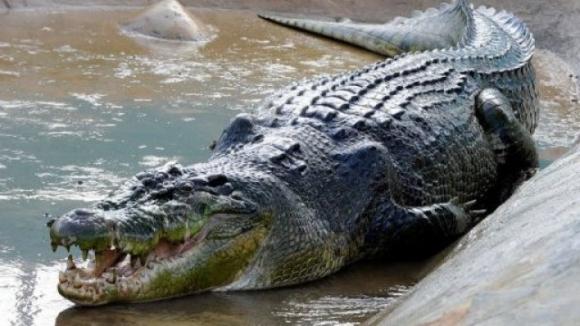 5-метров крокодил уби 19-годишен футболист