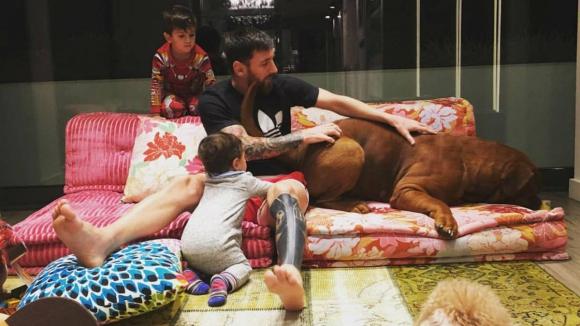 Лионел Меси в подкрепа на бездомните животни в България