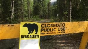 Мечка погуби участник в маратон в Аляска