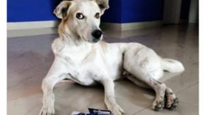 Индийският отбор не иска Бербатов, а куче на име Димитър