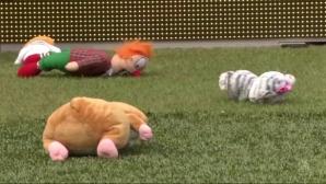 Фенове в Холандия с мил жест към малчугани (видео)