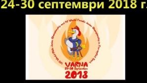 Гасят пожари на Световно на стадион във Варна