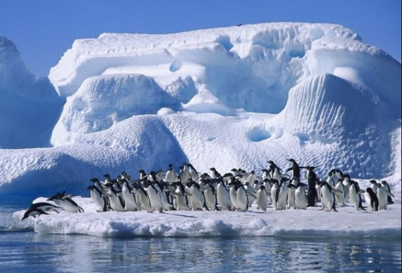 Петър Стойчев ще плува за рекорд в Антарктида