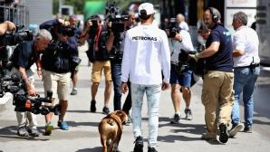 Кучето на Хамилтън изкарва по 700 долара на ден
