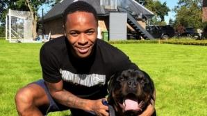 Стърлинг си купи куче-пазач за 15 000 лири