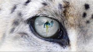 Състезание в защита на снежния леопард ще се проведе на Витоша