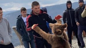 Хабиб Нурмагомедов пак се бори с мечка (видео)