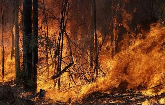 Вратарят на Брайтън дари 28 000 австралийски долара на пострадалите от пожарите