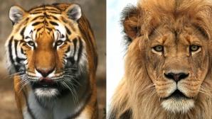Джей Ар Смит за Джордан и ЛеБрон: Не може да ги сравняваме, те са като тигър и лъв