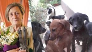 Нешка търси подслон за 16 кученца
