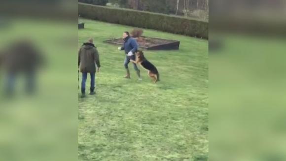 Кучета нападнаха легенда на Челси
